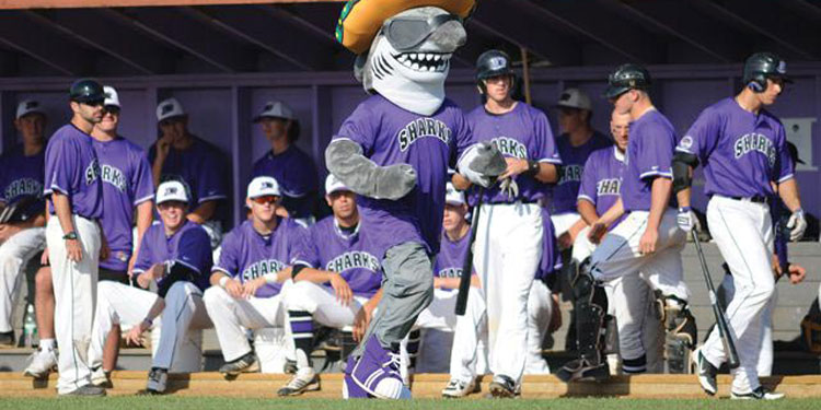 Martha's Vineyard Sharks Baseball